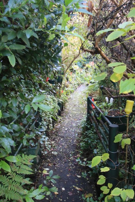 A strange garden
